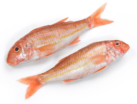 red_mullet