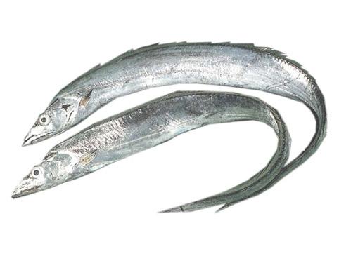 ribbon-fish